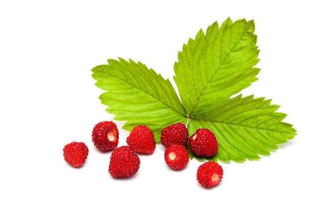 Wilde aardbeien Premium Foto