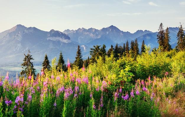 Wilde bloemen bij zonsondergang in de bergen. Premium Foto