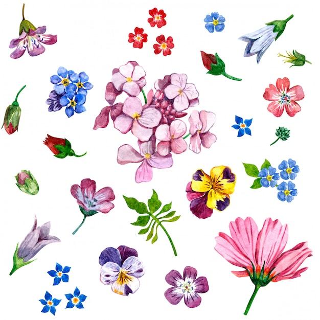 Wilde bloemen geschilderd in waterverf op wit Premium Foto