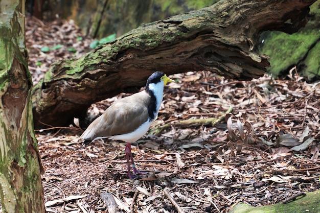 Wilde dieren in de taronga-dierentuin in sydney, australië Premium Foto