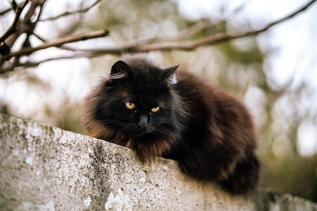 Wilde zwarte kat met groene ogen en onscherpe achtergrond Gratis Foto