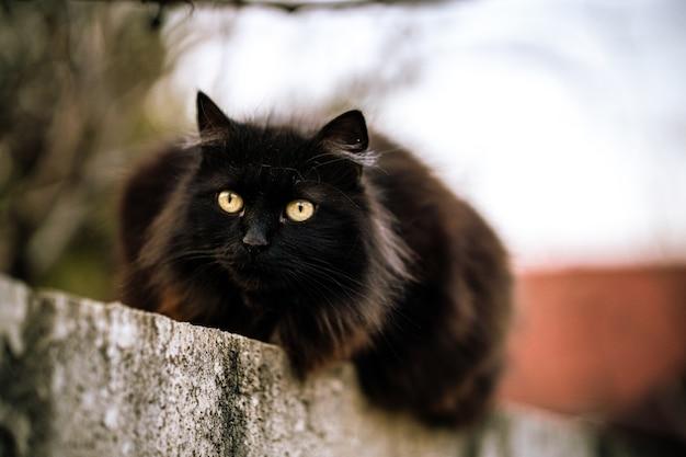 Wilde zwarte kat met groene ogen Gratis Foto