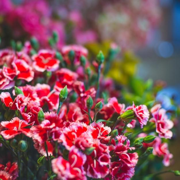 Willekeurige geschotene rode madeliefjes in een bloemenmarkt. Gratis Foto