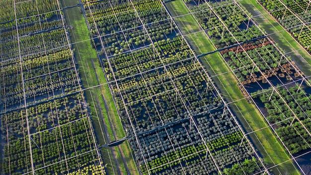 Winkel met een breed assortiment aan sierplanten voor landschapsarchitectuur. drone-weergave. groot assortiment naald-, bladverliezende en bloeiende planten. Premium Foto