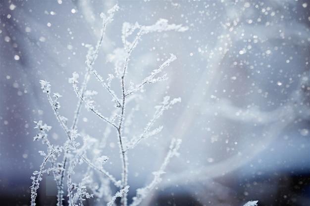 Winter aard achtergrond. Premium Foto
