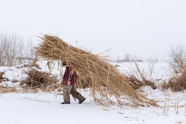 Winter. een man loopt door de sneeuw met een enorm pak droog riet op zijn rug Premium Foto