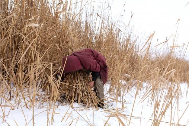 Winter. een man maait en verzamelt droog riet op een ijzig meer. Premium Foto