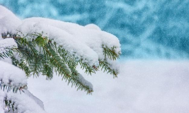 Winter kerst achtergrond. achtergrond met sneeuw bedekte takken van een kerstboom met kopie ruimte Premium Foto