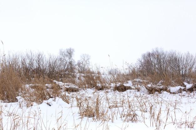 Winter, veld met droog gras bedekt met witte sneeuw Premium Foto