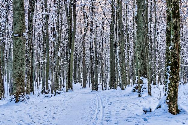 Wintersteeg tussen de bevroren bomen Premium Foto