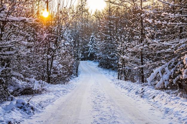 Winterweg in het bos Premium Foto