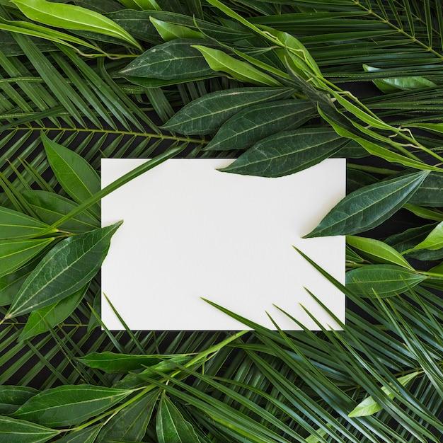 Wit blanco papier op de verse groene bladeren Gratis Foto