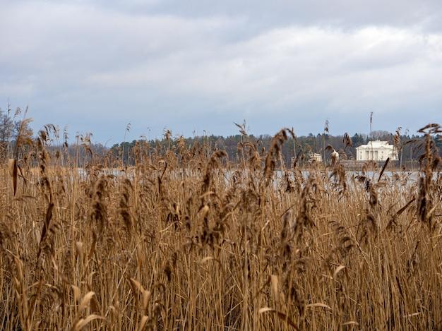 Wit gebouw achter een meer met gedroogd gras op de voorgrond Gratis Foto