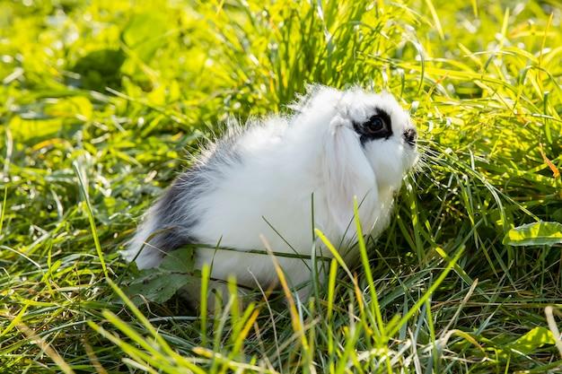 Wit konijn met zwarte stippen zit op het gazon Premium Foto