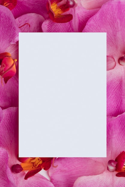 Witboek over paarse orchideeënachtergrond Gratis Foto
