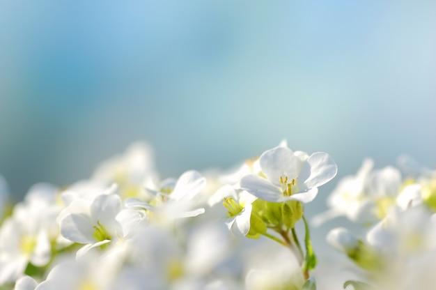 Witte bloemen met een blauwe achtergrond Gratis Foto