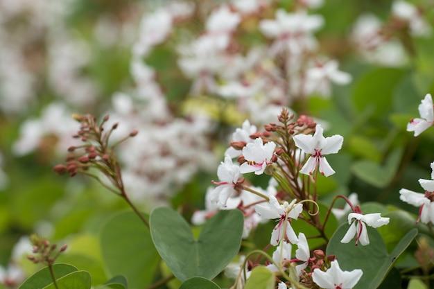 Witte bloesembloem Premium Foto