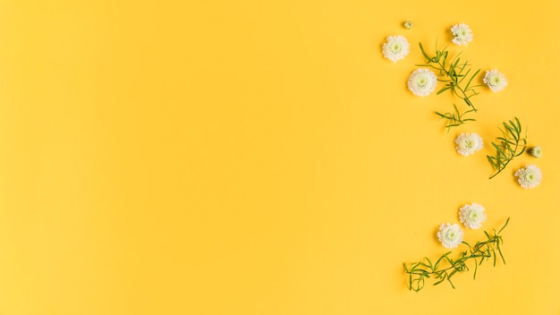 Witte chrysanthemum bloemen en bladeren op gele kaart Gratis Foto
