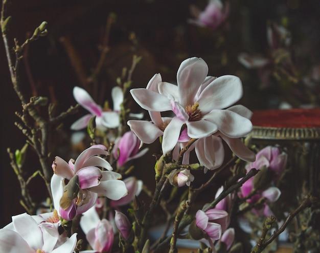 Witte en paarse orchidea bloemen tak. Gratis Foto