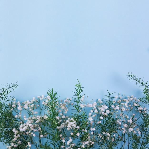 Witte gypsophila en bladeren op de blauwe achtergrond Gratis Foto