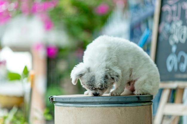 Witte hond foto Premium Foto