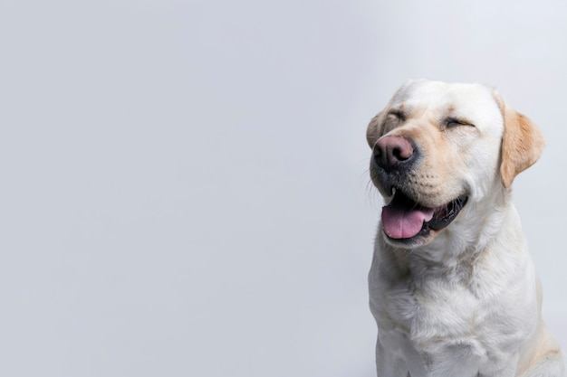 Witte hond Gratis Foto