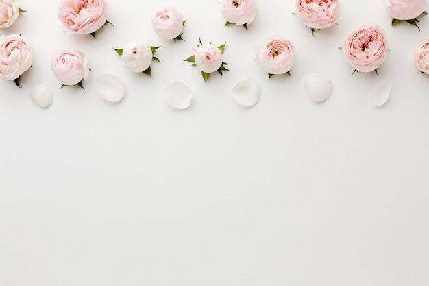 Witte kopie ruimte achtergrond met rozen Gratis Foto