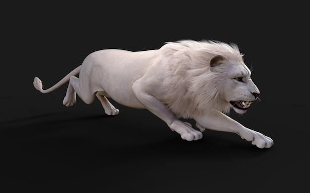 Witte leeuw handelingen en poses geïsoleerd op donkere zwarte achtergrond met uitknippad lion king Premium Foto