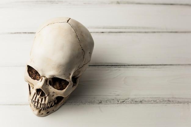 Witte menselijke schedel Gratis Foto