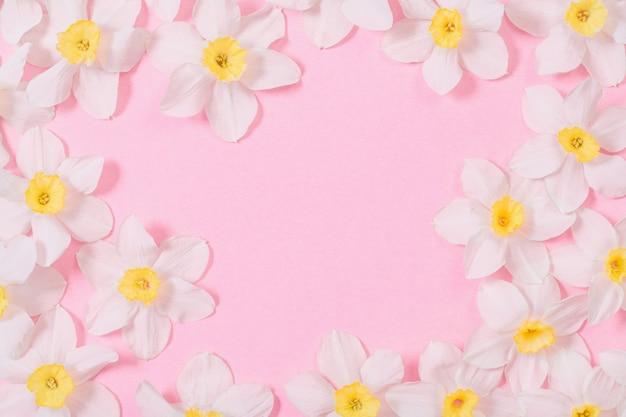 Witte narcissen op roze papier achtergrond Premium Foto
