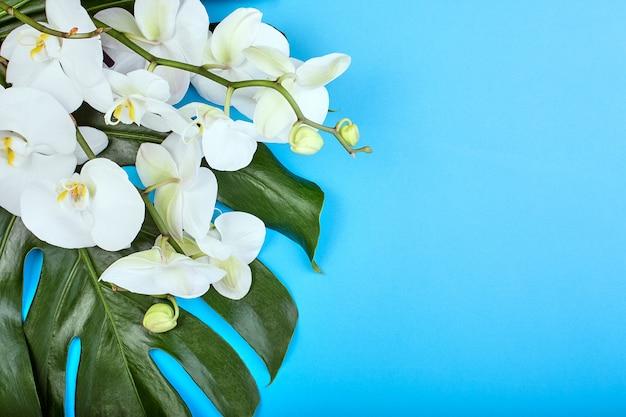Witte orchidee op blauwe achtergrond floral backgroundtropical witte orchideeën op blauwe achtergrond. kopieer ruimte Premium Foto