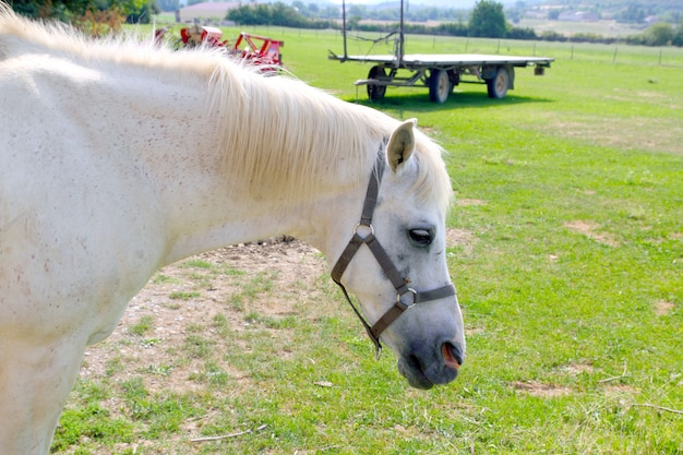 Witte paard rpofile portret openluchtweide Premium Foto