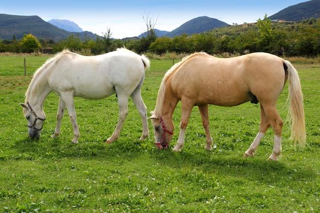 Witte paarden weide prairie grasland pyreneeën Premium Foto
