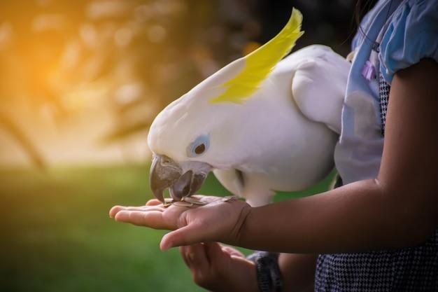 Witte papegaai die voedsel op de hand eet. Premium Foto