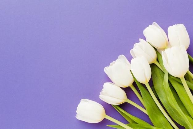 Witte tulpenbloemen met exemplaar ruimteachtergrond Gratis Foto