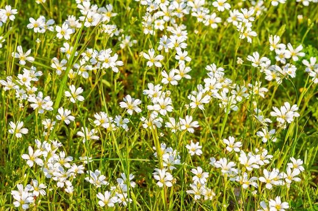 Witte veldbloemen op een zonnige dag Gratis Foto
