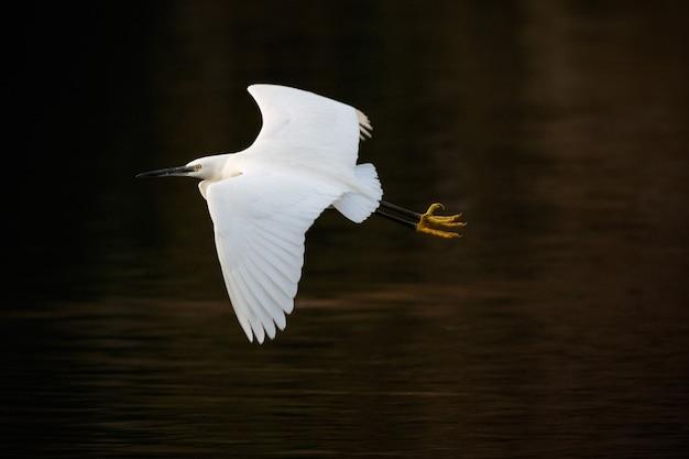 Witte zeevogel die over het meer vliegt Gratis Foto
