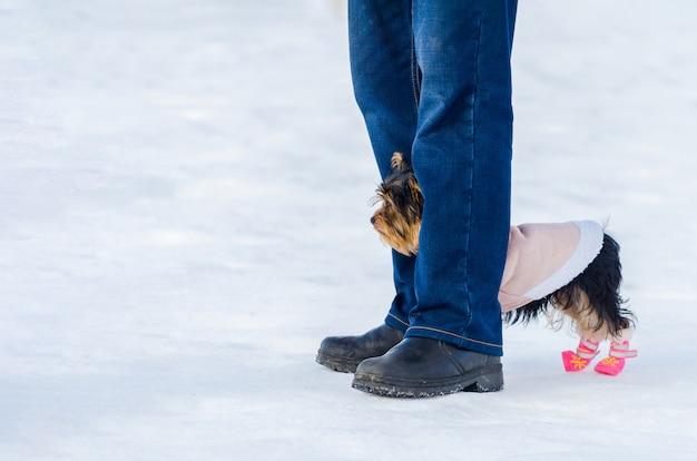 Yorkshire terrier hondje en zijn eigenaar Premium Foto