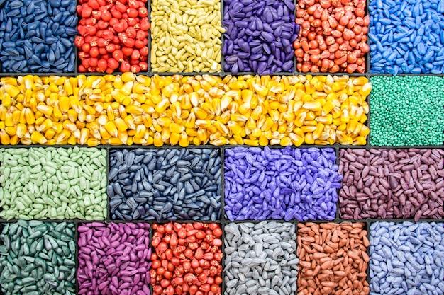 Zaad zonnebloempitten, maïs, radijs. geschilderde agrokleur voor sorteren en etiketteren Premium Foto