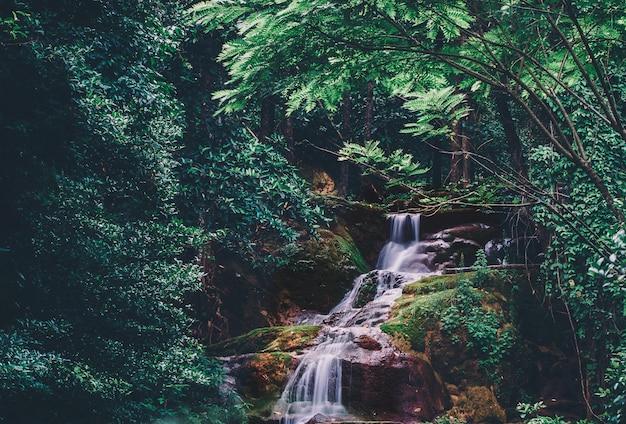 Zacht water van de stroom in het natuurpark, prachtige waterval in het regenwoud Premium Foto