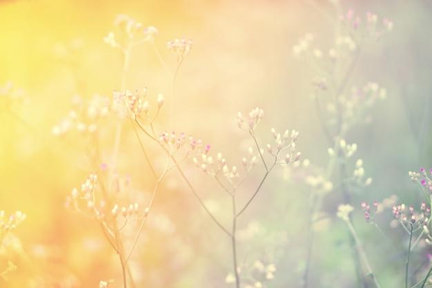 Zachte focus grasbloem abstarct lente, herfst aard achtergrond Premium Foto