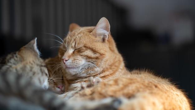 Zachte focus van huiskatten die samen in een huis worden geknuffeld en slapen Gratis Foto