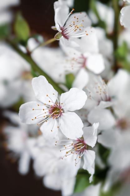 Zachte focus voorjaar achtergrond. abstracte bloemengrens met witte bloemen. Premium Foto