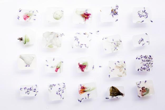 Zaden en bloemen in ijsblokjes Gratis Foto