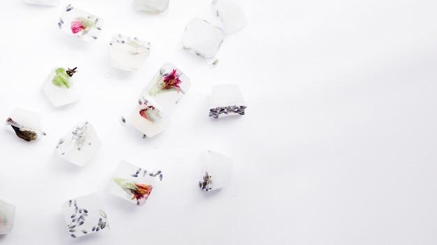 Zaden en planten in ijsblokjes Gratis Foto