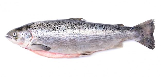 Zalmvissen op geïsoleerd wit Premium Foto