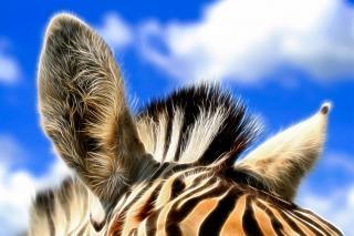 Zebra oren abstract Gratis Foto