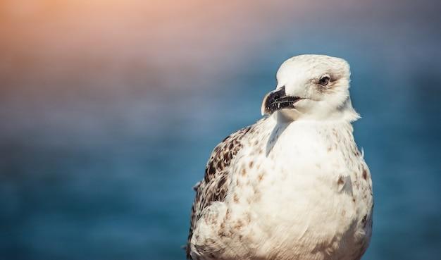 Zeemeeuw bij de zee Premium Foto