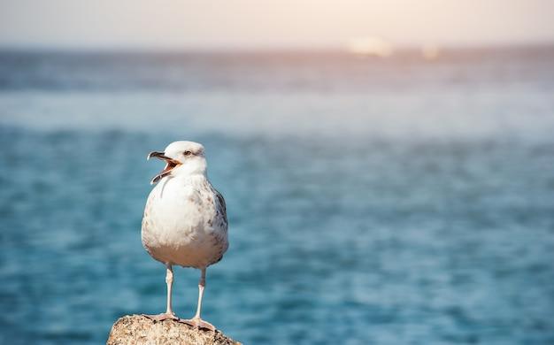 Zeemeeuw blijft op de steen bij de zee op de achtergrond Premium Foto