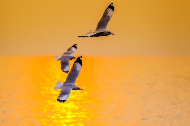 Zeemeeuw die in de zonsondergang in bangpu, thailand vliegt Premium Foto